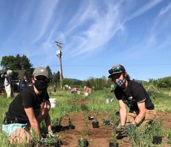 InSitu Garden Volunteers