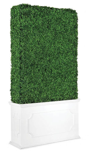 Boxwood Hedge Wall 1.jpg