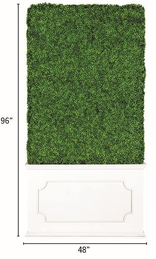 Hedge Wall 2.JPG