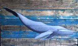 Baleine Bleu