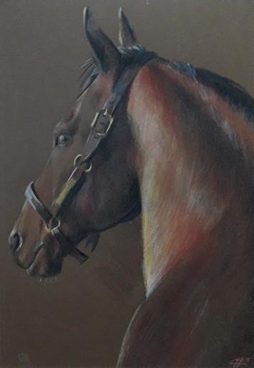 Portrait d'un cheval baie