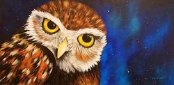 Little Owl....Big Dreams