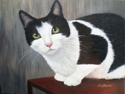 **** SOLD **** Tom the Cat