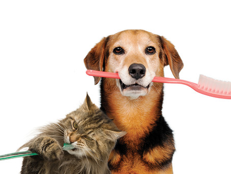 Oral Health and Hygiene for your Pet