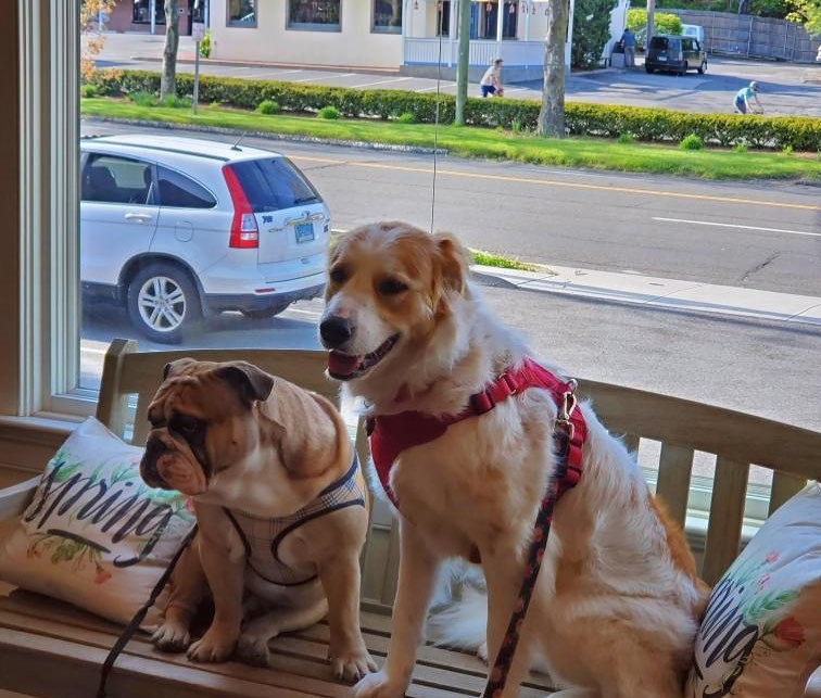 Town House for Dogs and Cats_Waiting for