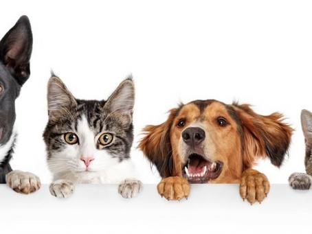 Homemade Pet Treats 101