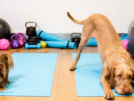 Getting your Pet in Summer Ready Shape: The Importance of Pet Exercise