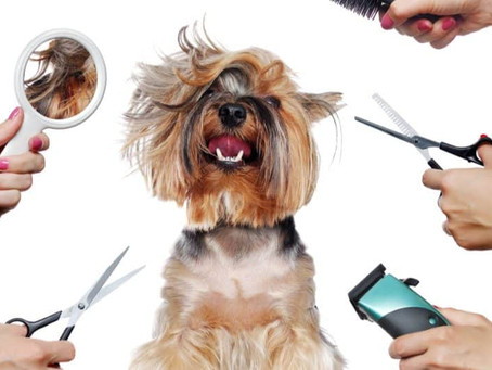 The Importance of Grooming your Pet