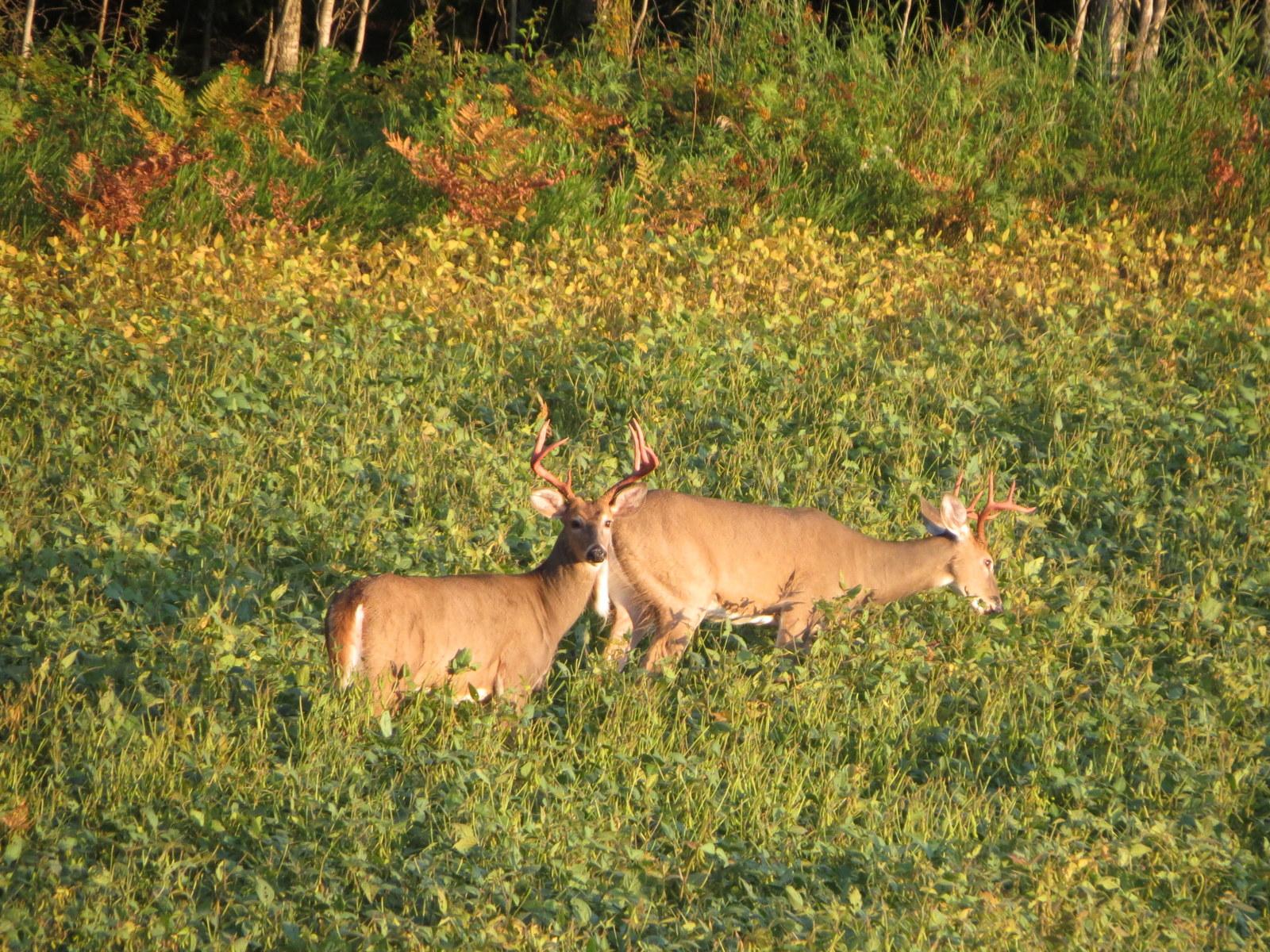 Deer Hunting MN