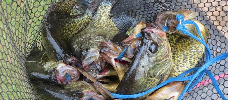 crappies fishing Northern MN