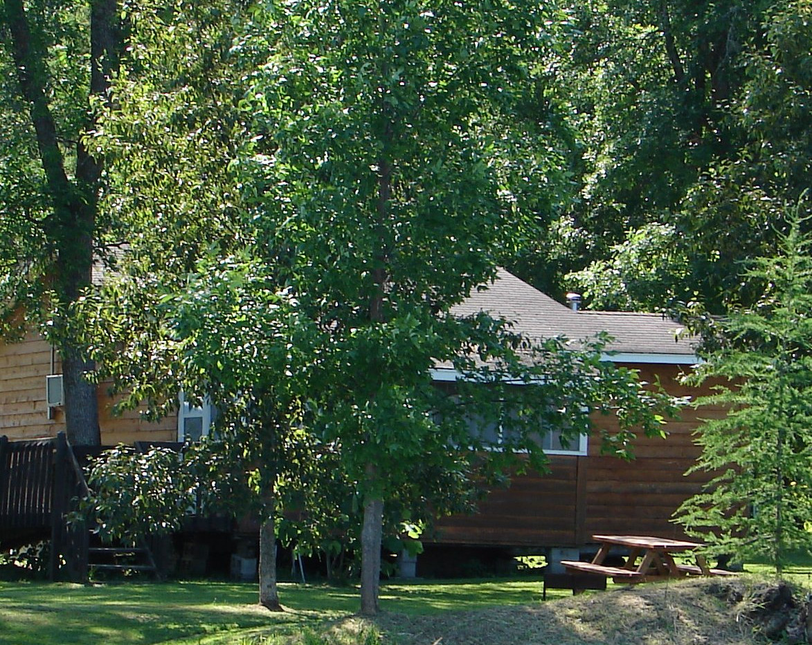 the-birds-nest lake side cabin rental
