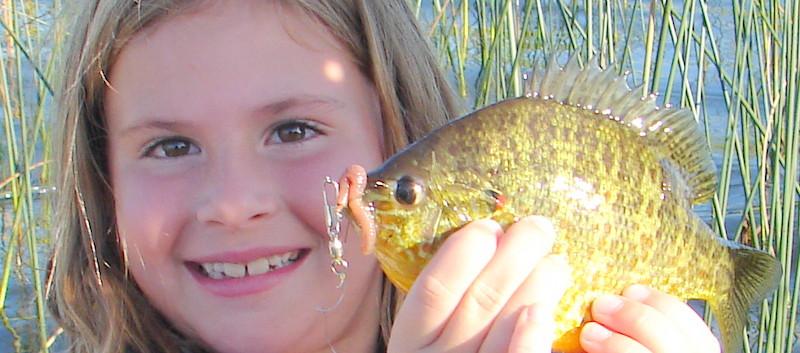 blue gill fishing-Sunfish-brim fishing.JPG