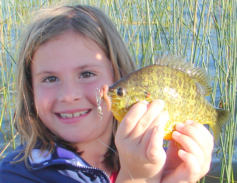 blue gill fishing-Sunfish-brim fishing.JPG