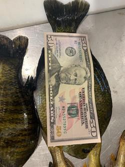 $50 Sun Fish