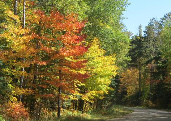 fall-color-tour