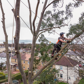 Tree Reduction Leeds, Boston Spa