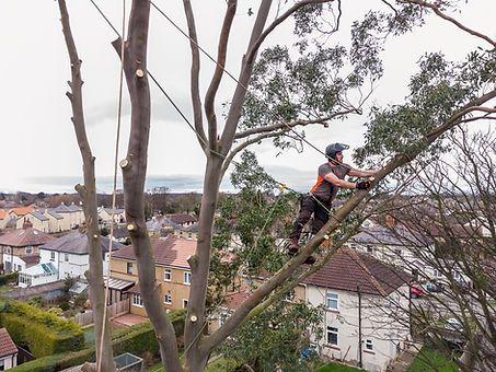Leeds Tree Surgeon-5.jpg