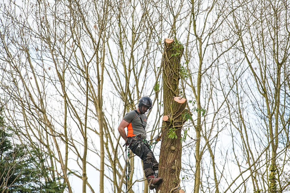 Arborist at work in the Leeds area
