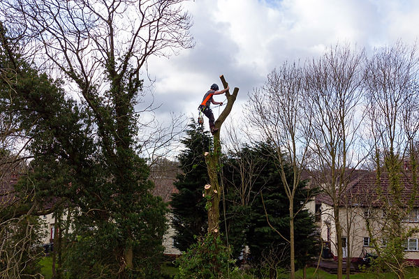 Tree-reduction-in-Leeds.jpg
