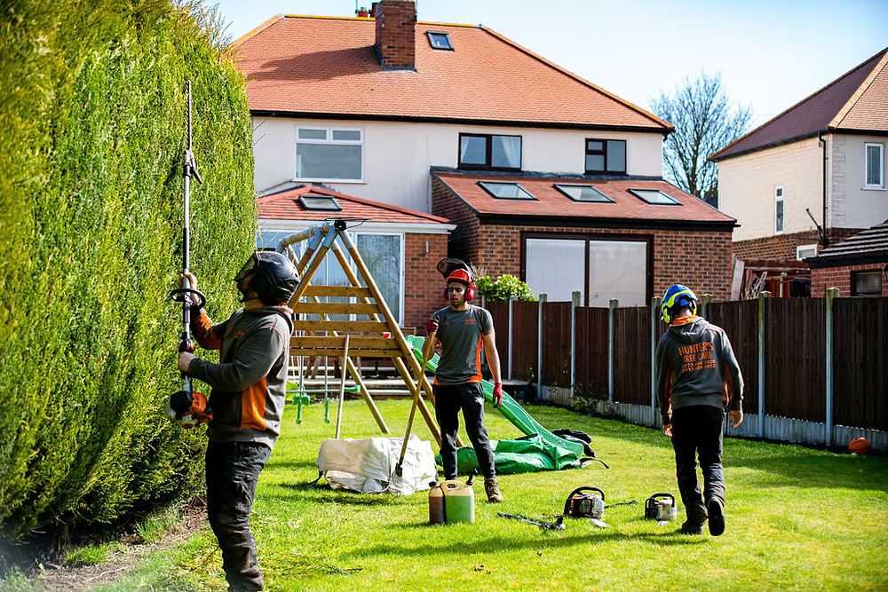 A team of Tree Surgeons cutting a conifer hedge in Leeds, West Yorkshire