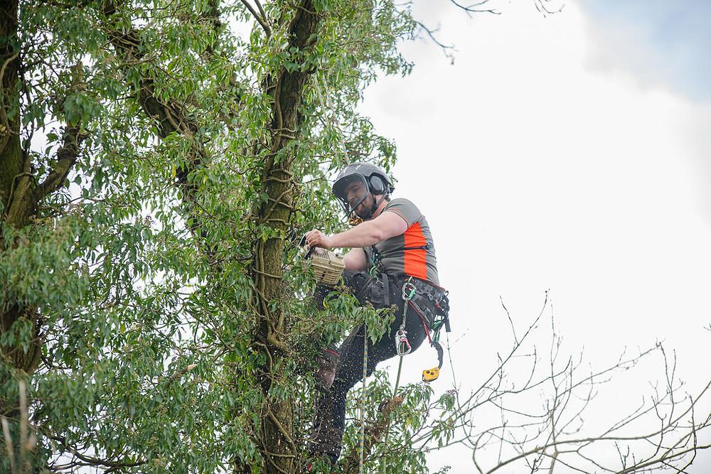 Tree surgeon cutting a tree in Leeds