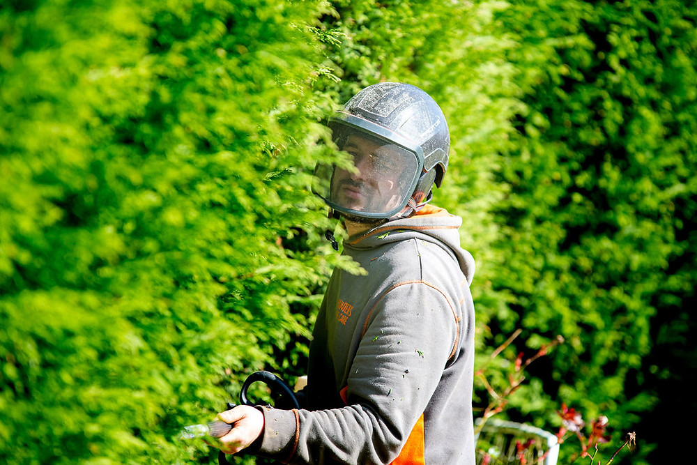 Conifer Hedge maintenance by Hunters Tree Care a company in Leeds, West Yorkshire