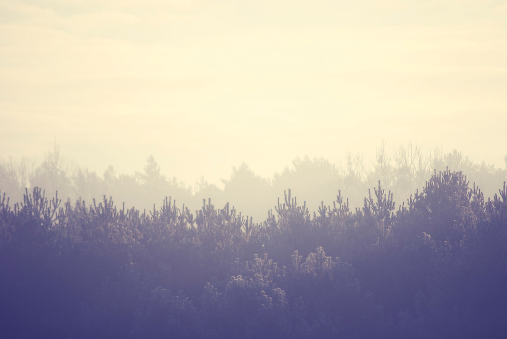 misty forest view, reflect, breath