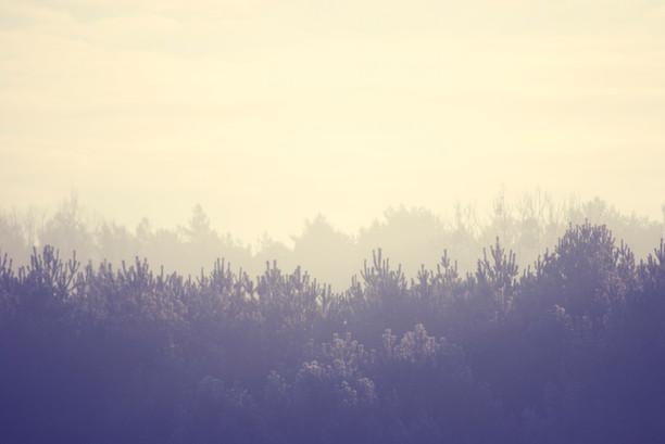 Forest Landscape 森林