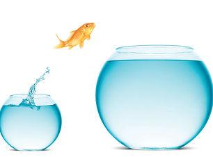 Помощь бизнесу (рыбка).jpg