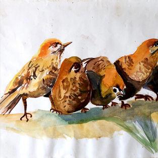 Wild Chirps