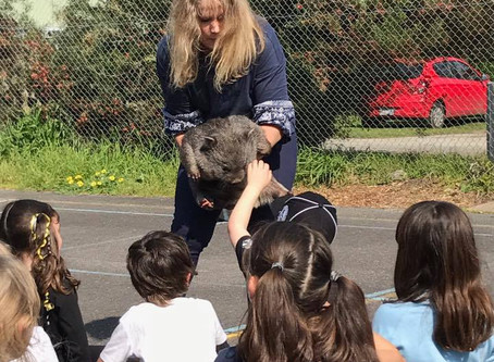 A visit from wildlife rescue