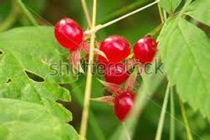 Brambleberries.jpg