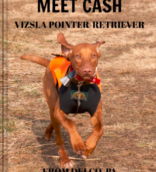 CASH, VIZSLA POINTER-RETRIEVER