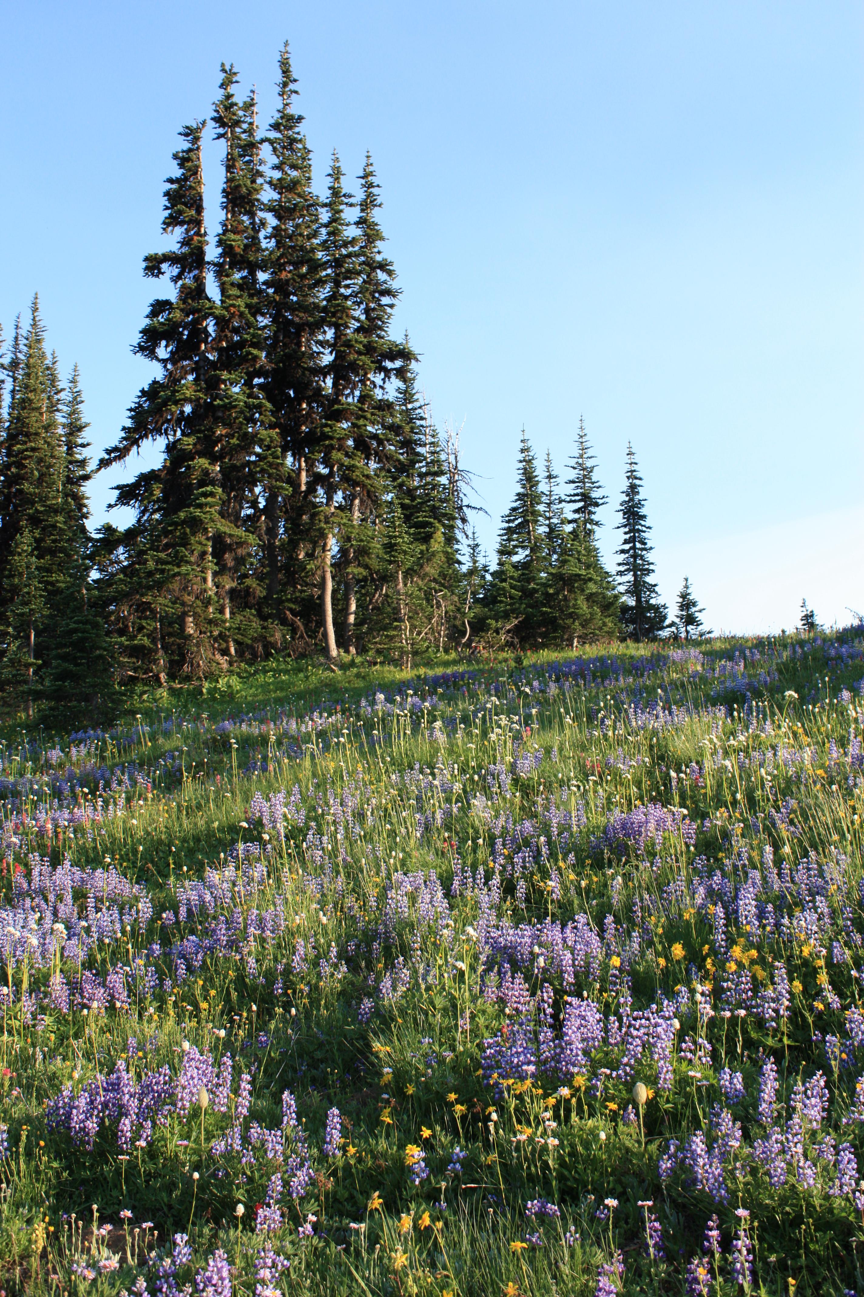 Wildflower meadows at Sunrise