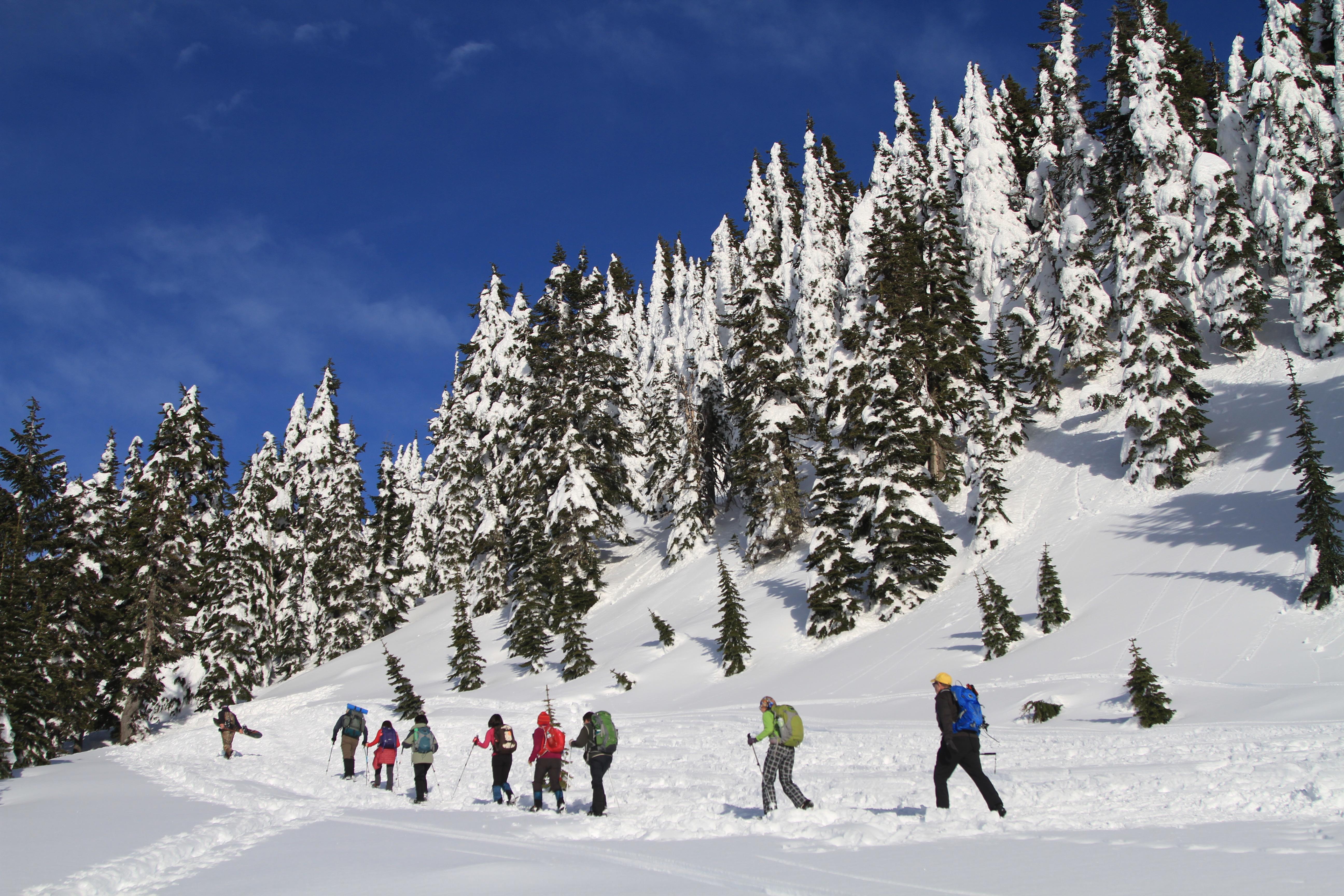 Snowshoeing at Paradise