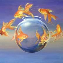 Goldfish - SOLD