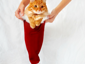 My top 7 presents for your pets this Christmas