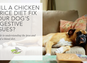 Will a chicken and rice diet fix your dog's digestive issues?