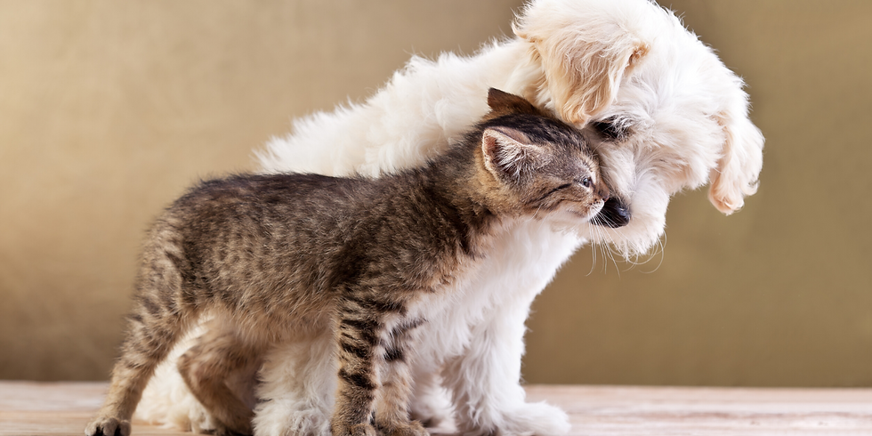 Start Off On The Right Paw: A Puppy & Kitten Nutrition Workshop