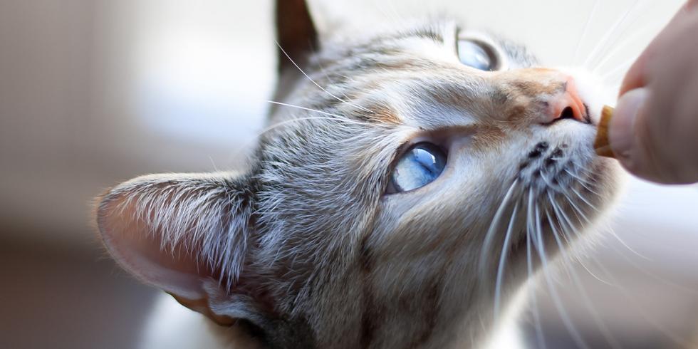 Feline Nutrition for Optimum Wellness