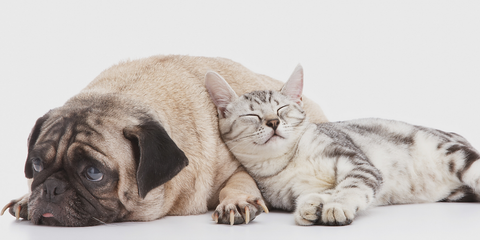Natural Gut Health for Pets