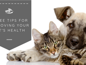 Three Tips For Improving Your Pet's Health