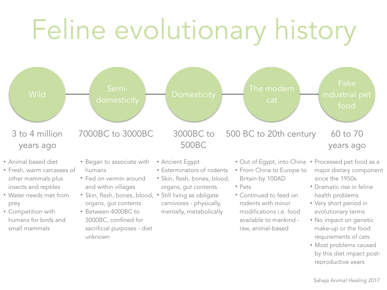 Timeline_Canine Evolutionary History