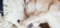 Cat and dog cuddling.png