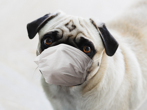 Your Pet's Toxic Load: What It Is & Why It's Important