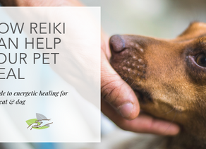 How Reiki can help your pet heal