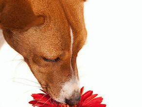 Spring is in the air - is your pet feeling the itch?
