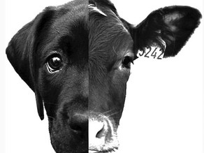 Speciesism On Your Plate, Part 1