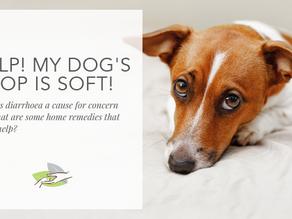 Help! My dog's poop is soft!
