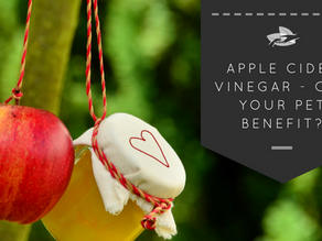 Apple Cider Vinegar - Can Your Pet Benefit?